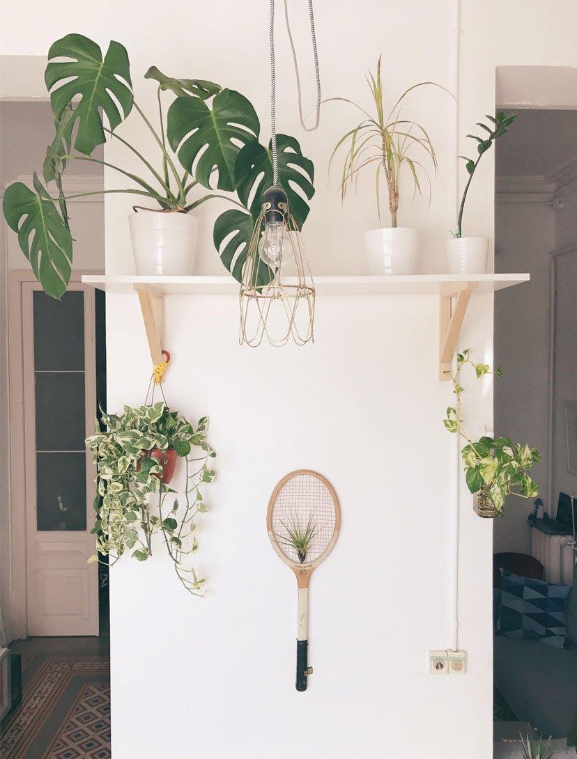 romance con plantas, flores y cactus