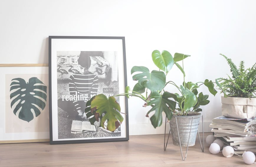 un romance con las plantas