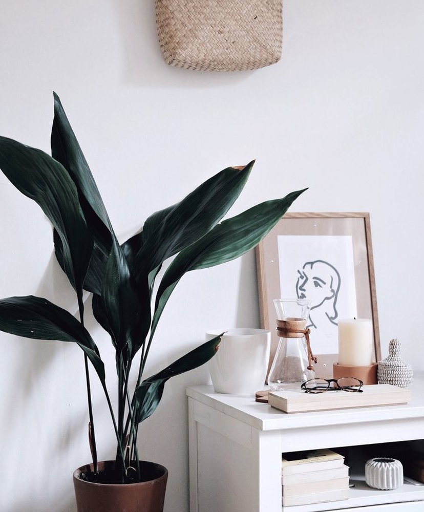 cuentas seguir instagram the hanging plants