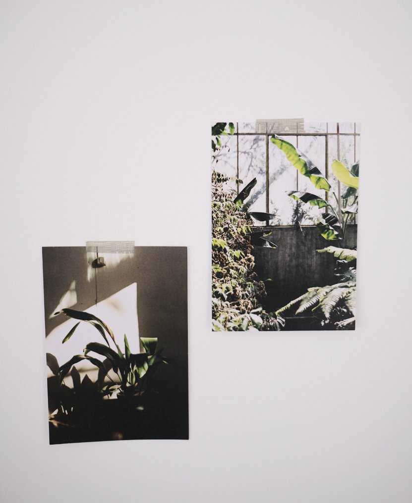 fotos con plantas verdes en pared