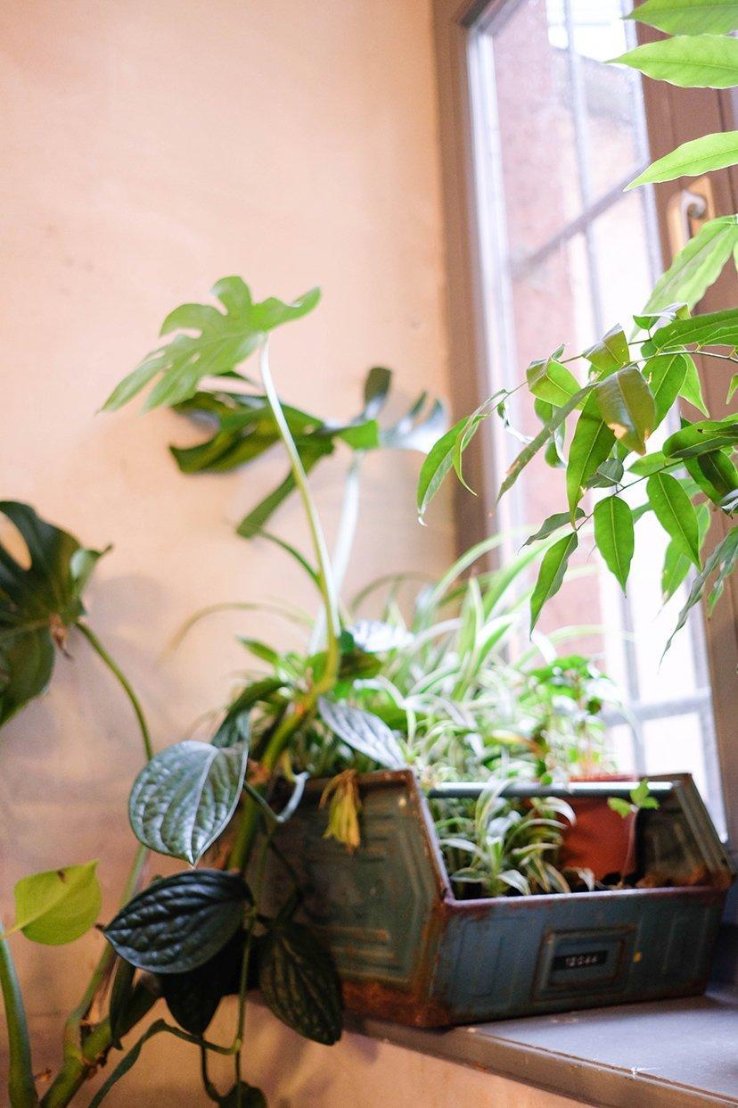 plantas en rincón
