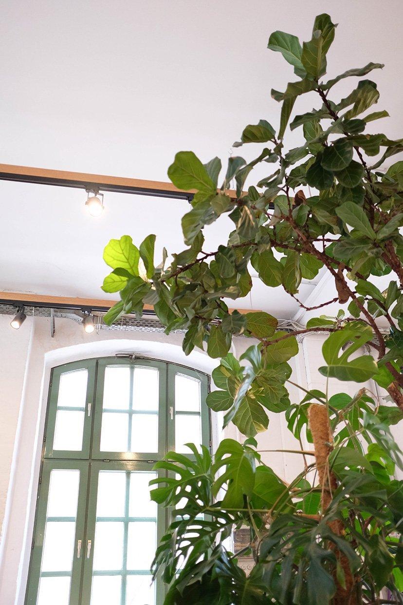plantas en local