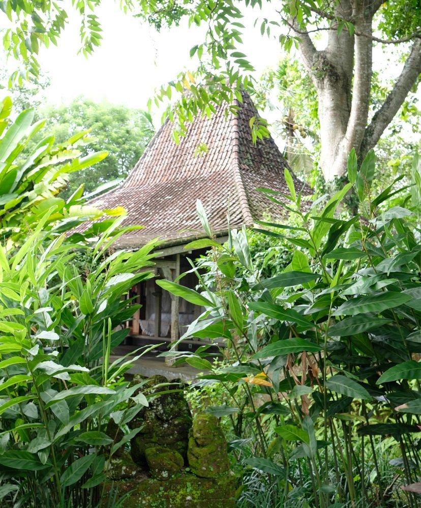 casa en medio de la selva