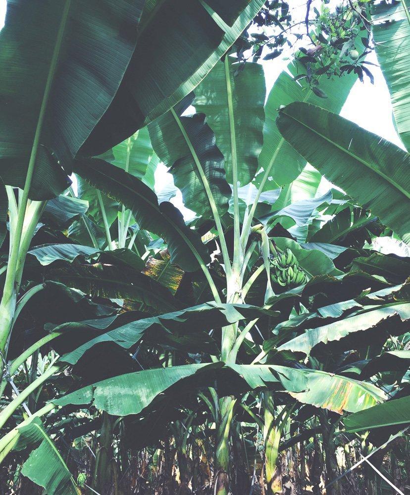 selva salvaje